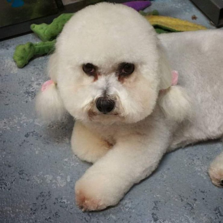 Pet grooming salon lovable pets billings mt the skilled hands of our groomers will never rush and their eye for detail will leave your pet looking its best solutioingenieria Images