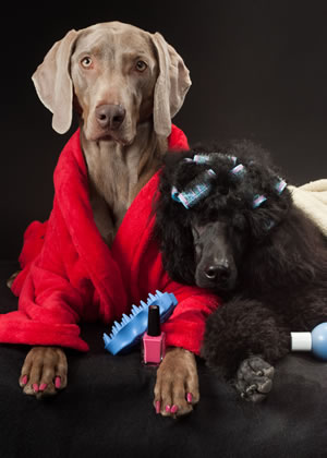 "We go beyond pet grooming and offer luxurious extras like hair coloring and nail ""pawlish""."